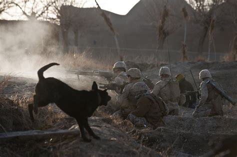 Starterkit Talenan afghanistan dogs of war part 1