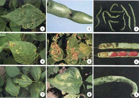 List Of Plant Diseases Caused By Bacteria - diseases caused by pathogenic bacteria