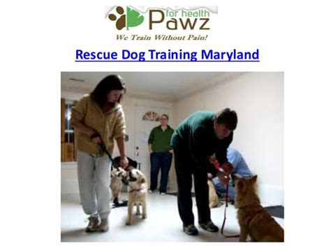 rescue puppies in md amazing rescue maryland