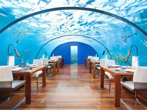 ithaa undersea restaurant dinner for two under the sea the underwater restaurant