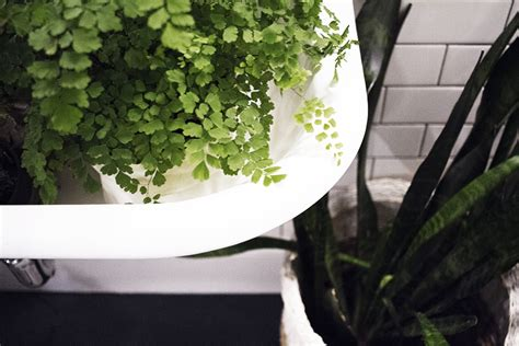 plants for windowless bathroom three plants that thrive in low light bathrooms