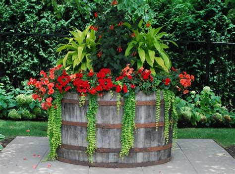planting gardening ideas shade container gardening ideas shade container plant