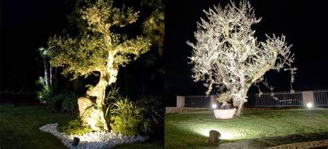 illuminazione alberi illuminazione degli alberi anche senza il pollice luminoso