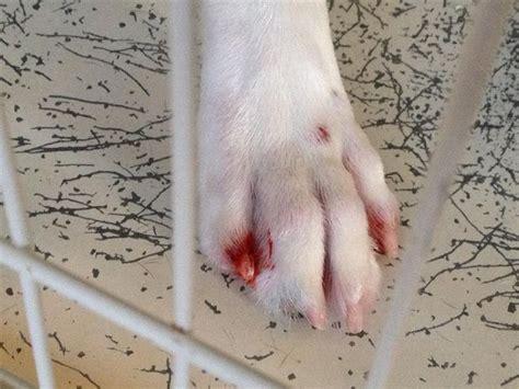 paw bleeding 1000 ideas about epilepsy aid on epilepsy absence seizure and