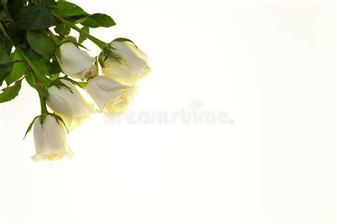 rosas blancas hermosas en el ramo fondo para las invitaciones de boda tarjeta de felicitaci 243 n