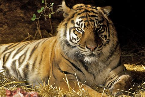 wild animal brytne loin sheclick com