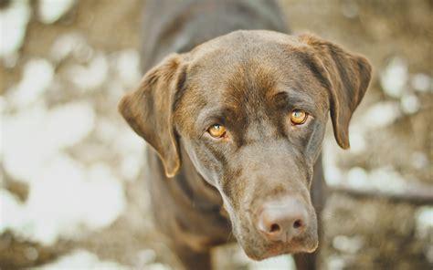pet dogs images pet wallpaper 43659