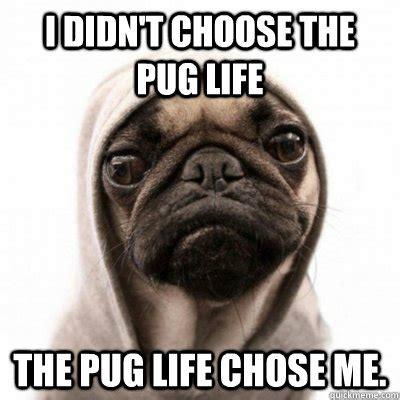 Pug Meme - i didn t choose the pug life the pug life chose me the