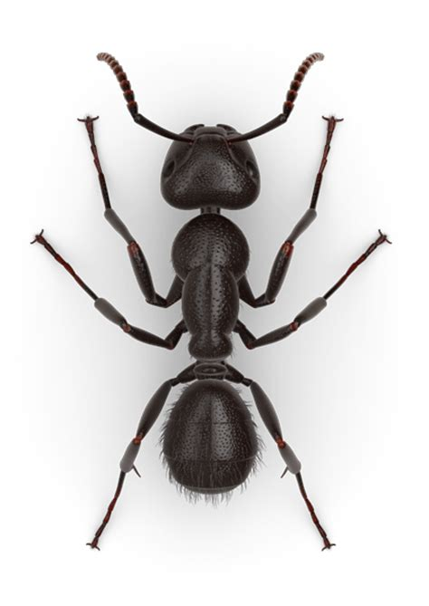 Picture Of Ants