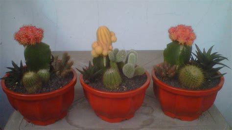 Jual Mini Kaktus Terarium Kaskus adjie kaktus 2 rangkaian kaktus mungil terarium mungil