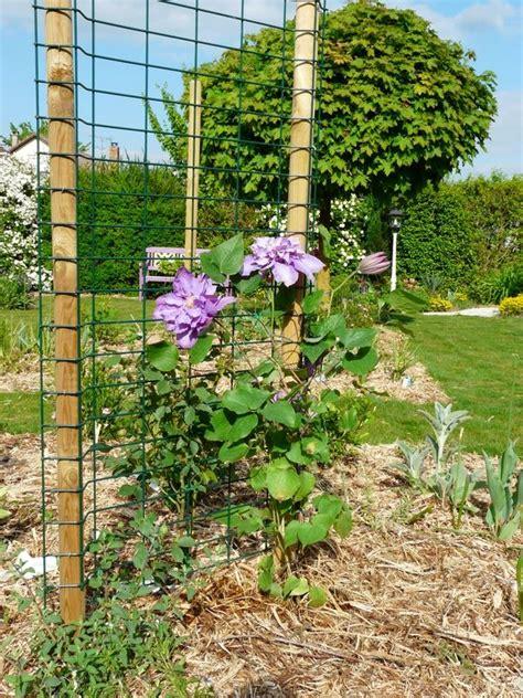 Support Plante Grimpante Bambou by Dix Photos Rien Que Pour Le Jardin De Marguerite