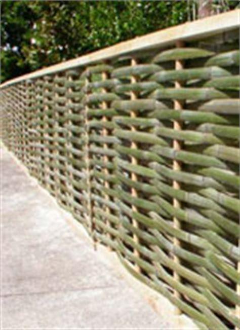 Sichtschutz Garten Pflanzen 106 by Bambus Refrath Schafft Bambuskultur Im Bambus Shop Werden