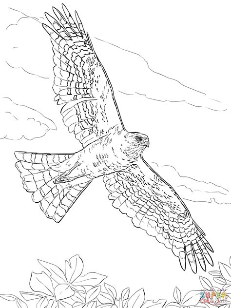 hawk coloring pages sharp shinned hawk coloring page free printable coloring