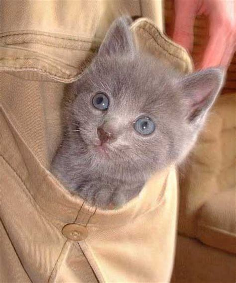 google images cats nice funny cat images for google plus 2 f5b3d funny images