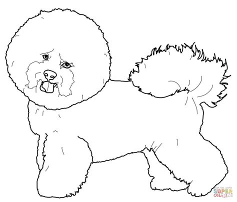havanese dog coloring page bichon frise coloring page free printable coloring pages