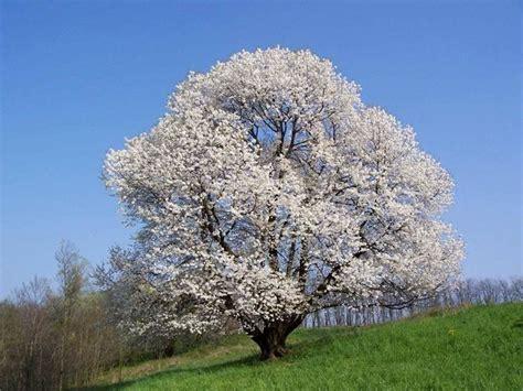 alberi da giardino prezzi alberi da giardino alberi latifolie alberi da giardino