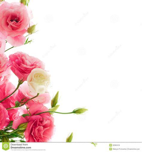 white lotus day spa point flores bonitas do eustoma no fundo branco foto de stock