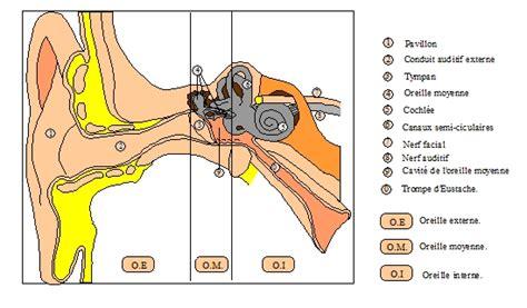 audioprothsiste oreille rappels d anatomie et de