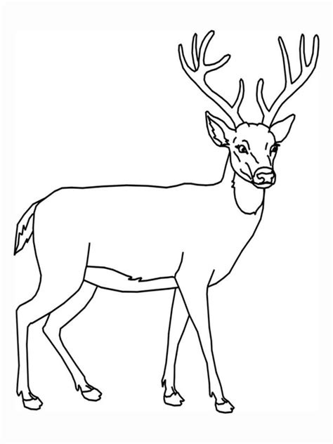 easy deer coloring pages line drawing of a deer clipart best