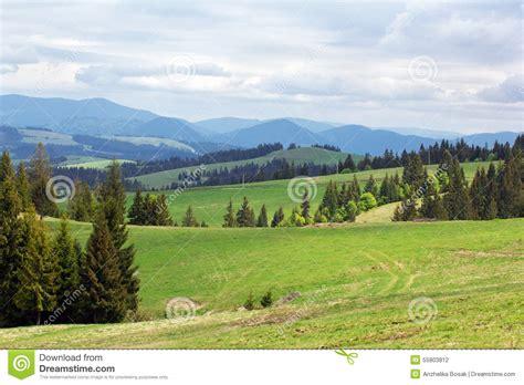 imagenes prados verdes paisaje de prados verdes con los abetos y las monta 241 as