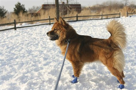 how to a dogs how to find the best boots for all seasons
