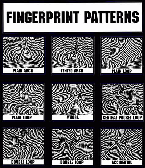 types pattern grading picture of fingerprint patterns parties plus spy