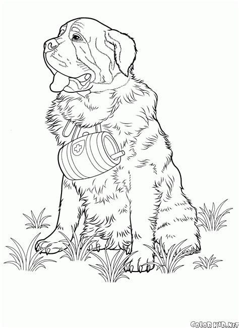 coloring pages of coon dogs coloring page dogs