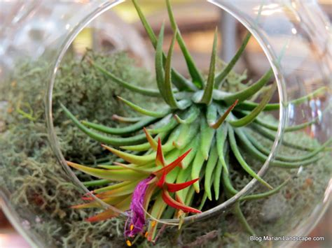 plants that live in the air in the garden with mariani