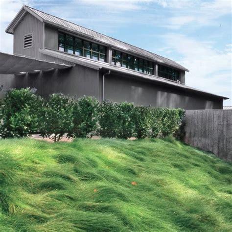 backyard grass alternatives 1000 ideas about grass alternative on pinterest lawn
