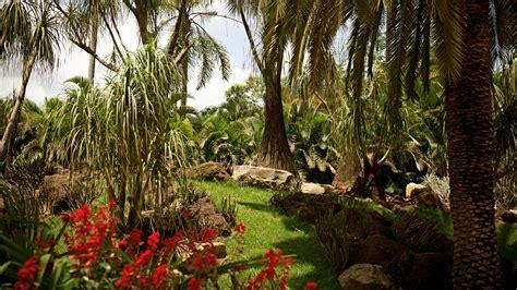 botanical garden inhotim