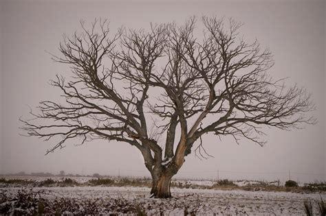 imagenes de arboles invierno invierno galer 237 as fotonatura org