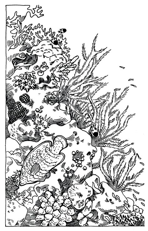 Clipart Of A Sketched Reef by Reef Black And White Clipart Clipart Suggest