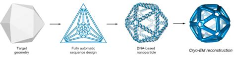 Dna Origami Software - automated top design technique simplifies creation of