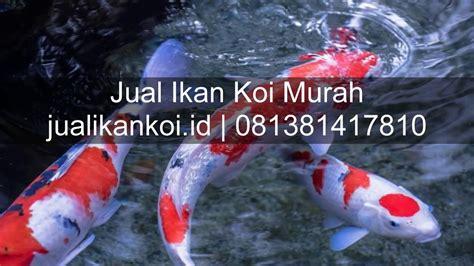Jual Bibit Ikan Sidat Di Bandung jual ikan koi padang call langsung 081381417810
