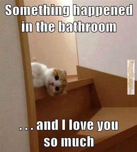 Meme Bathroom by 25 Best Images About Bathroom Memes On Toilets