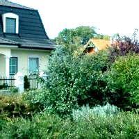 pflanzzeit für bäume 3800 gemeinde haringsee haringsee