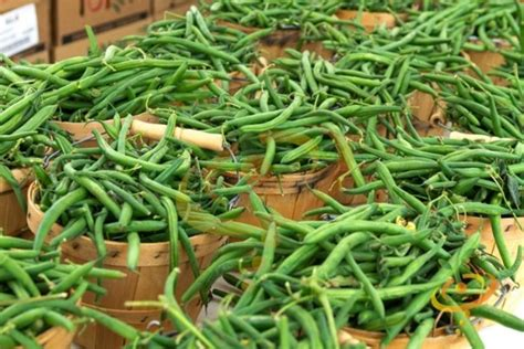 types of garden beans green bean varieties types of green beans