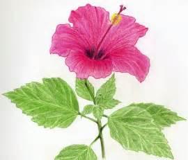 simple drawings of hibiscus flowers jus 4 kidz