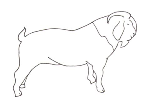 Boer Goat Coloring Page | boer goat coloring pages coloring pages for free