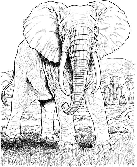 asian elephant coloring page amazing elephant coloring pages