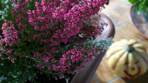 garten und ideen straub 5 ideen f 252 r ihre terrasse im herbst lilli straub den