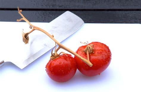 wann muss tomaten sã en tomaten pflanzen tomatenpflanzen s 228 en ziehen und mehr