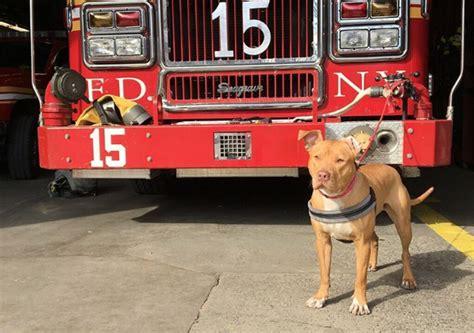 fire station dog house fire station dog dogs today magazine