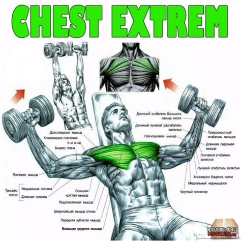 the basics of dumbells and dumbbell workouts all