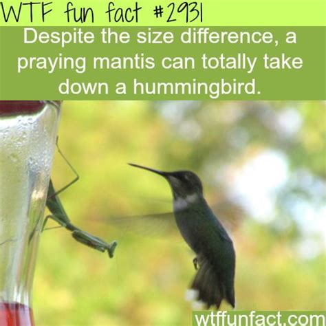 2089 best images about wtf facts on pinterest wow facts