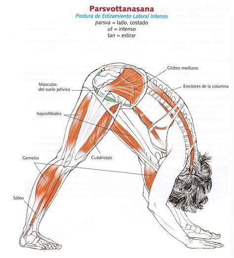anatoma del yoga la anatom 237 a del yoga