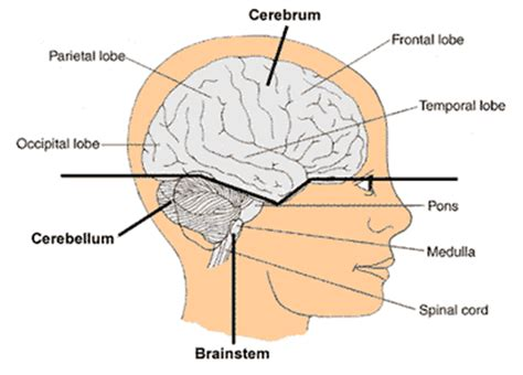 can a brain tumor cause mood swings cancer an introduction to brain cancer