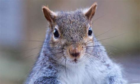 squirrels have long memory for problem solving