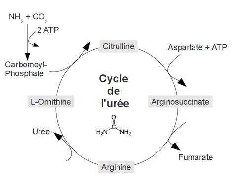 t protein ur random cycle de l ur 233 e wikiwand