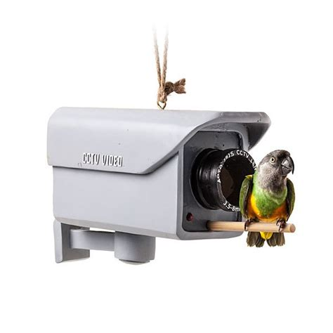 surveillance camera bird feeder boing boing
